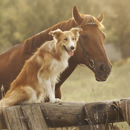 Combi Deals Honden