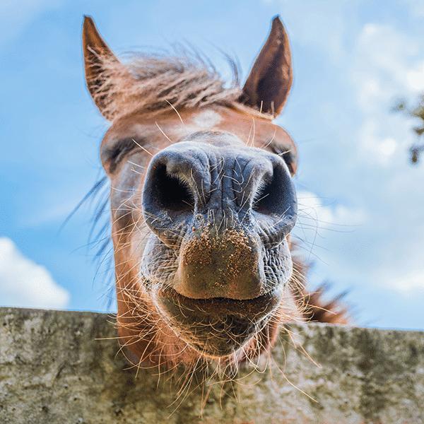 Combi Deals Paarden